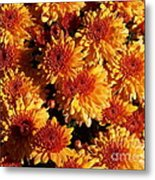 Blaze Of Flowers Metal Print