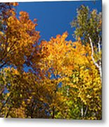 Blazing Autumn Colors - Just Lift Your Head Metal Print
