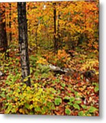 Blazing Forest Metal Print