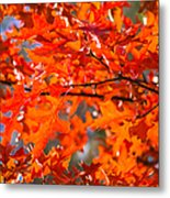 Blazing Maple Metal Print