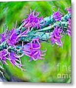 Blazing Star Metal Print
