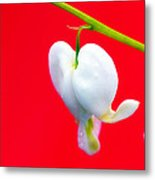 Bleeding Hearts Metal Print