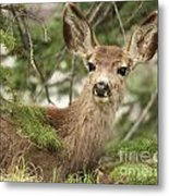 Blending In The Pines Metal Print
