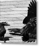 Blind Crow Metal Print