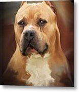 Blond Pit Bull By Spano Metal Print