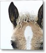 Blonde Horse Metal Print