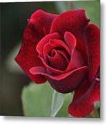 Blood Rose Metal Print