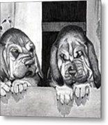 Bloodhound Puppies Dog Portrait  Metal Print