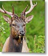 Bloody Elk Metal Print