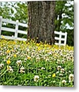 Bloom Gathering Metal Print by Beverly Hammond