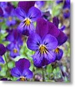 Bloom Purple Violets Metal Print
