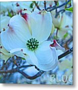 Bloom White Dogwood Metal Print