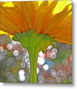 Bloom Yellow Daisy Metal Print