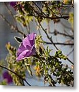 Blooming Above The Lake Metal Print