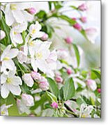 Blooming Apple Tree Metal Print by Elena Elisseeva
