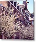 Blooming Decoration Of The Streets. Pink Spring In Amsterdam Metal Print