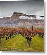 Blooming Orchards 2 Metal Print