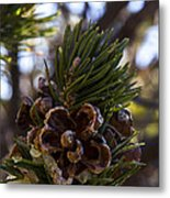 Blooming Pinecone Metal Print