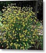 Blooming Rudbeckia Bush Metal Print