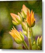 Blooming Succulents I Metal Print
