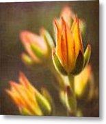 Blooming Succulents V Metal Print