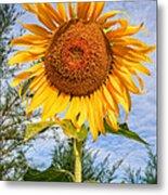 Blooming Sunflower V2 Metal Print by Adrian Evans