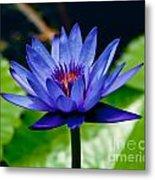 Blooming Water Lily Metal Print