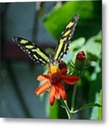 Blooms And Butterfly1 Metal Print