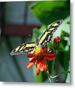 Blooms And Butterfly2 Metal Print