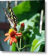 Blooms And Butterfly4 Metal Print