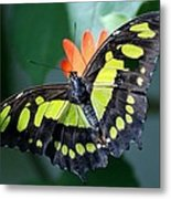 Blooms And Butterfly5c Metal Print