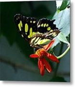 Blooms And Butterfly7c Metal Print
