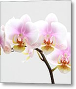 Blooms On White Metal Print by Juergen Roth