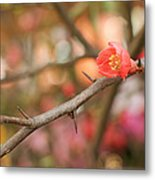 Blossom Amidst The Thorns Metal Print