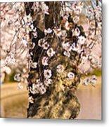 Blossom Ponytails Metal Print