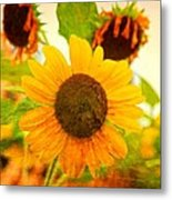 Blossoming Sunflower Beauty Metal Print
