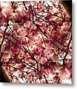 Blossoming Blossoms Metal Print