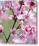 Blossoming Hillside Metal Print