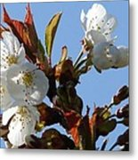 Blossoms 2 Metal Print