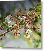 Blossoms And Sparrow Metal Print
