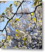 Blossoms And Leaves Metal Print
