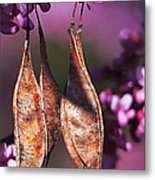 Blossoms And Seedpods Metal Print