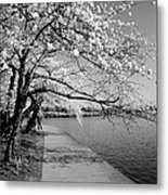 Blossoms In Bw Metal Print