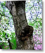 Blossoms In Central Park Metal Print