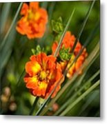 Blossoms In The Reeds Metal Print