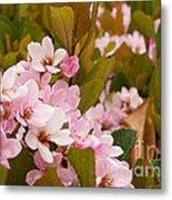 Blossoms Of The Rain 2 Metal Print