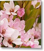 Blossoms Of The Rain Metal Print