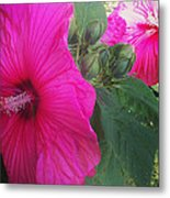 Blosssoms And Buds Hibiscus  Metal Print