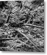 Blow Down Glacier National Park Bw Metal Print