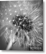 Blowball   Metal Print